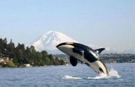 Cruise list maritime travel cruise deals sciox Choice Image