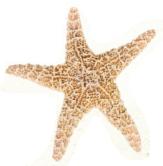/_uploads/images/Star.png